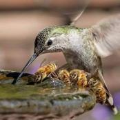 colibrí.jpg